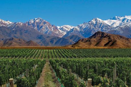 Offre Exclusive de vins étrangers